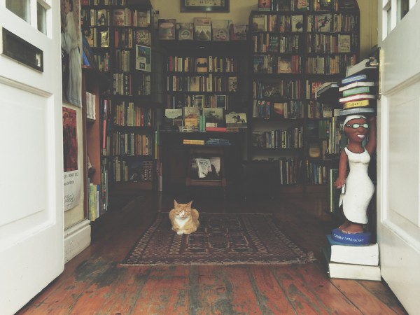 The resident cat of Verbatim bookstore in Dorp Street illustrating how to come sit and stay