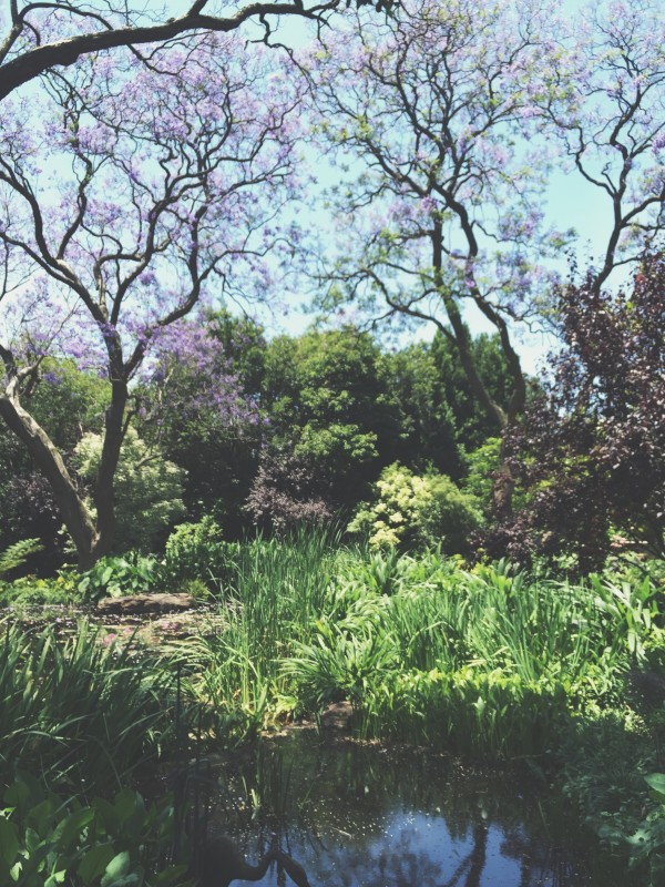 Susan Greig Garden 2
