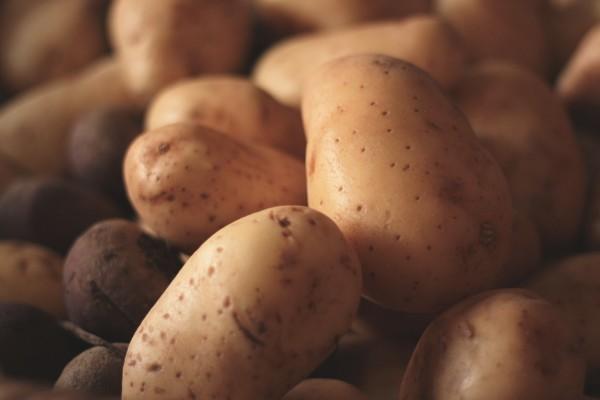 Brandslut_PotatoShed_8