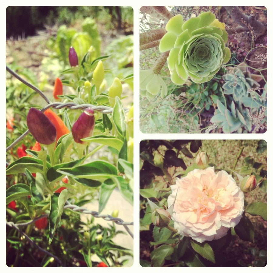 Flora of the Little Karoo