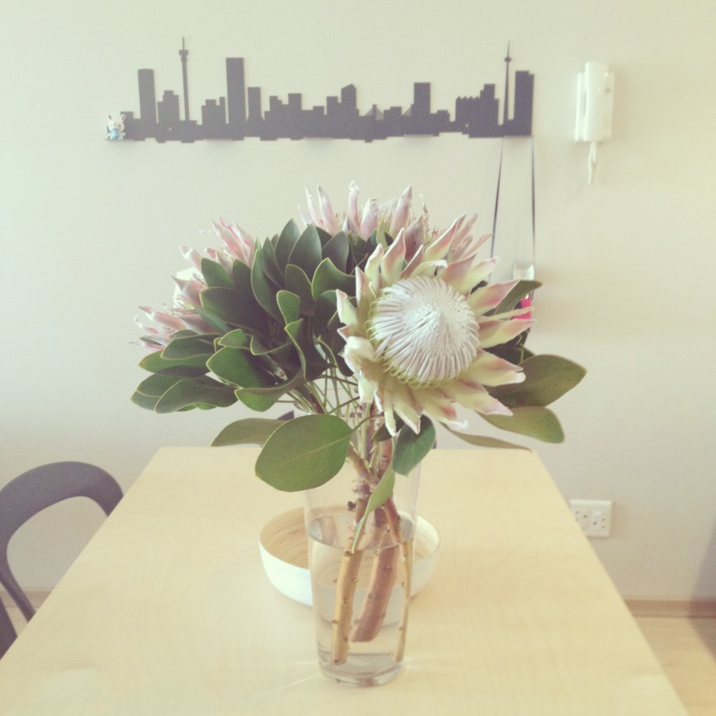 Fresh King Proteas from the Adderley Street flower sellers