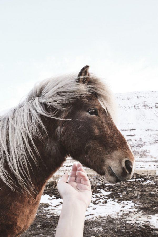Brandslut An Adventure in Iceland 17 2