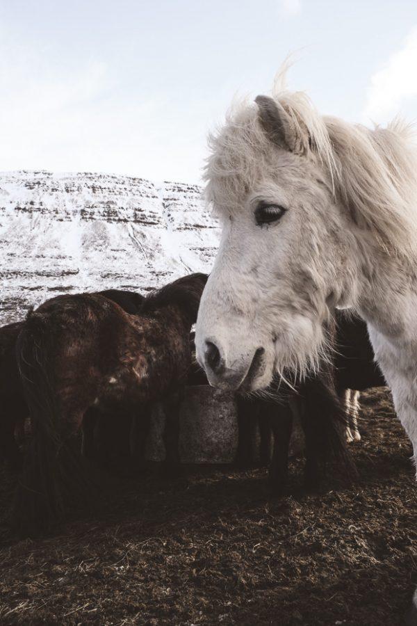 Brandslut An Adventure in Iceland 18 2
