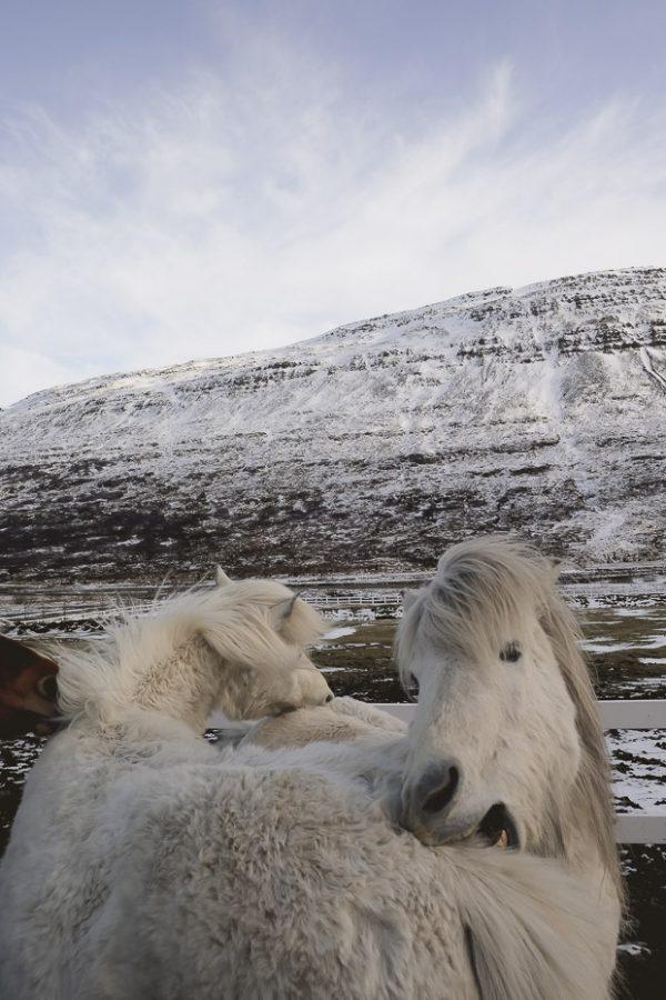 Brandslut An Adventure in Iceland 20 2